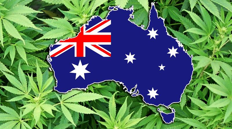 """Rezultat slika za upit """"australia cannabis"""""""
