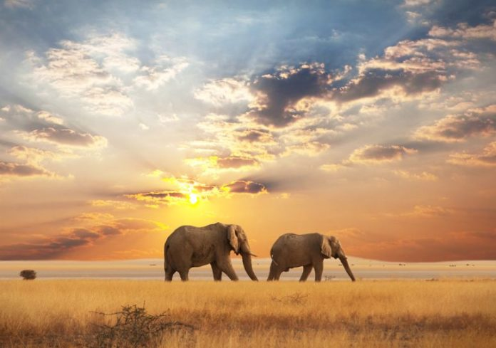 Why Kenya Is the Hottest Tourist Destination in 2021?